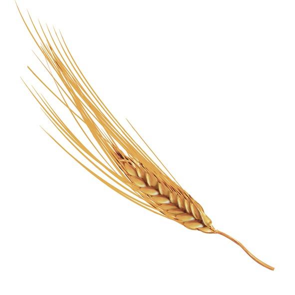Galletas integrales Gullón, Ilustración espiga de trigo